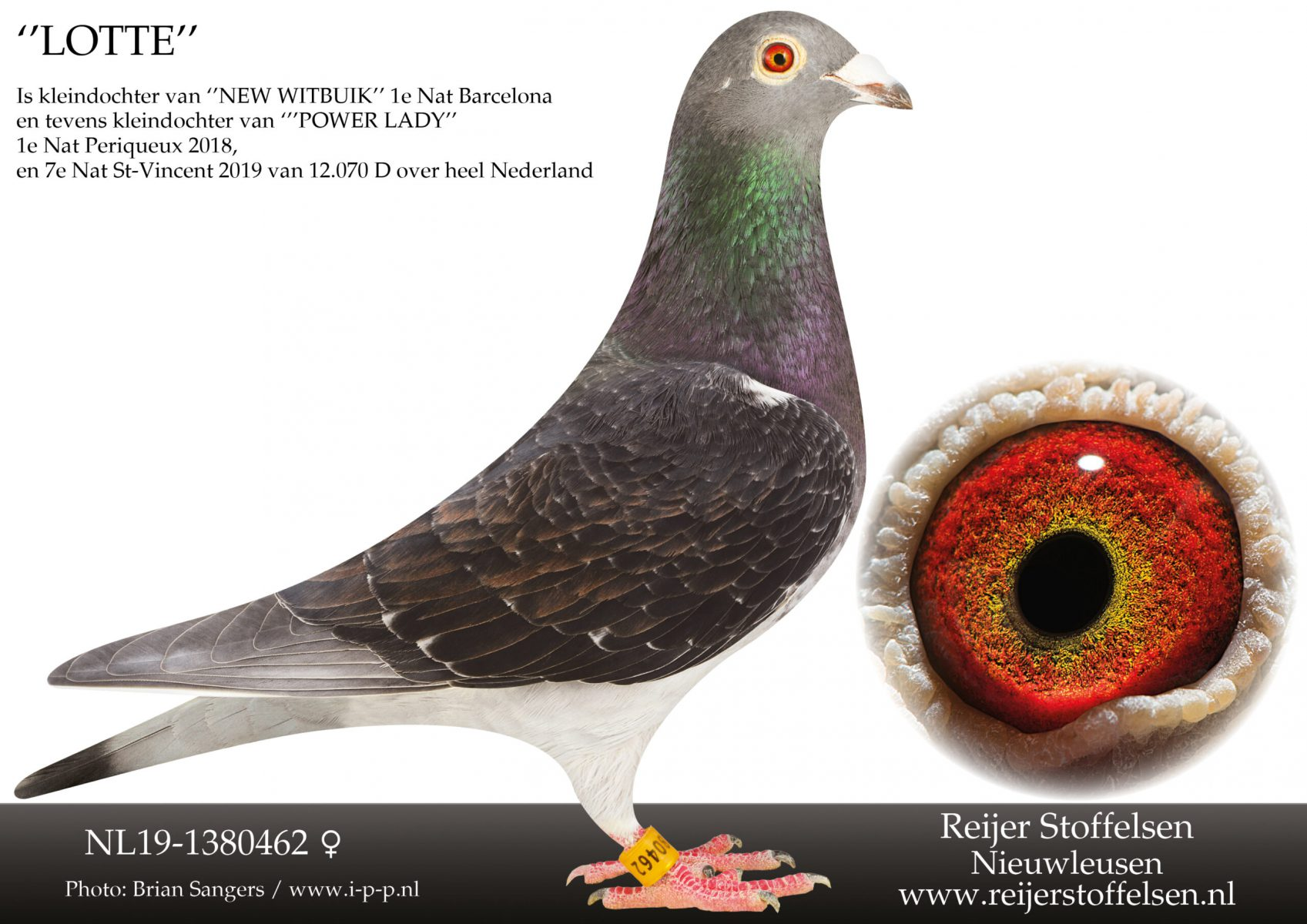 NL19-1380462-scaled