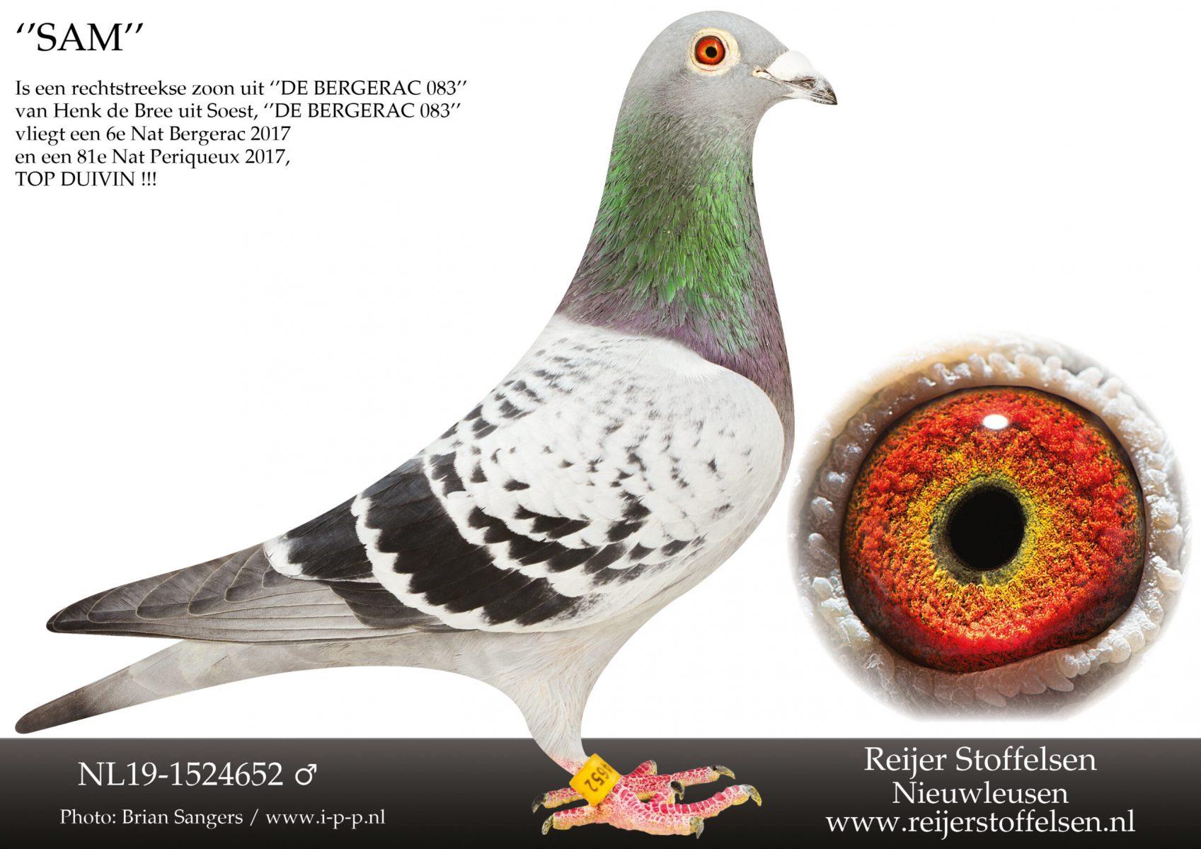 NL19-1524652-scaled