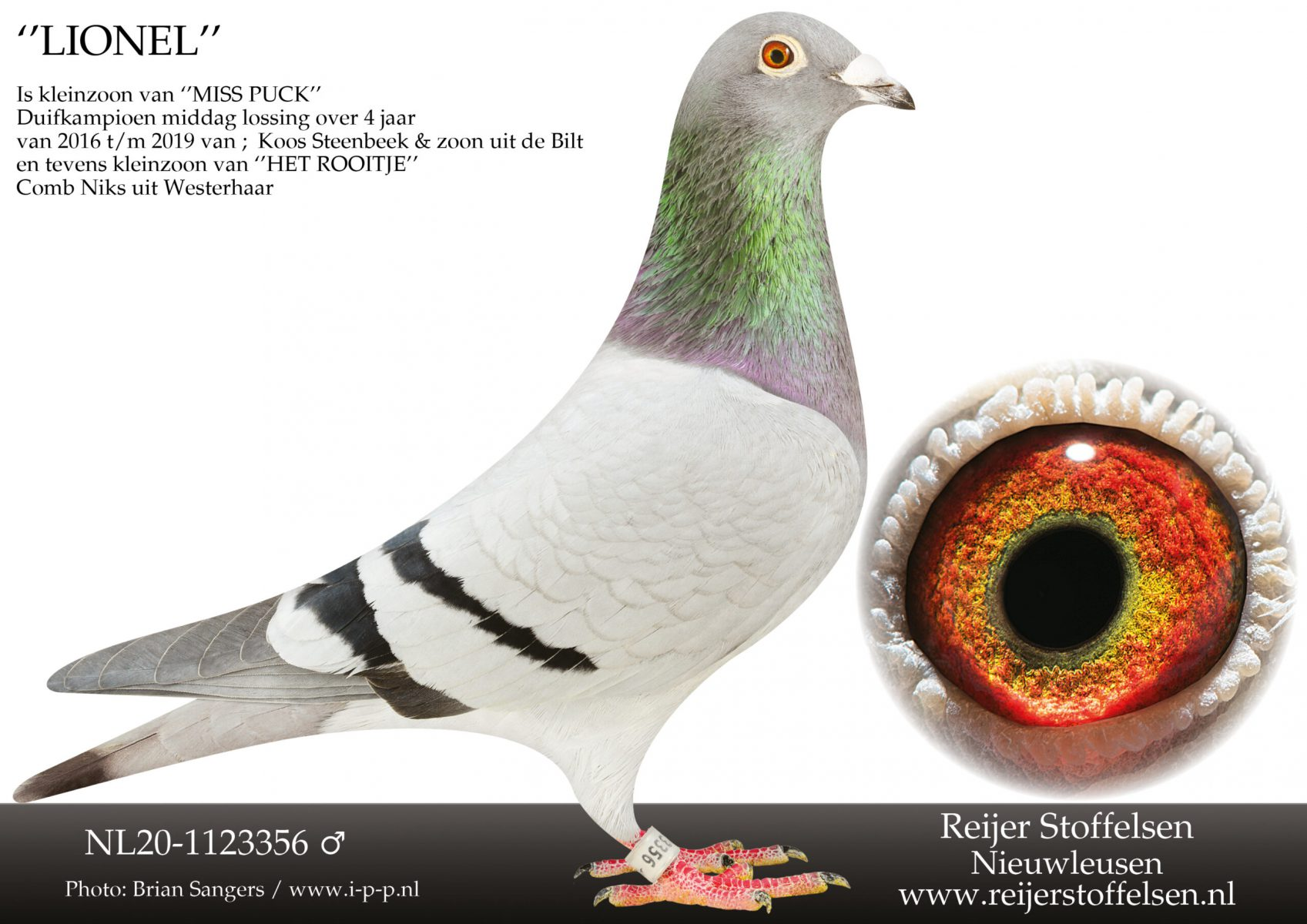 NL20-1123356-scaled