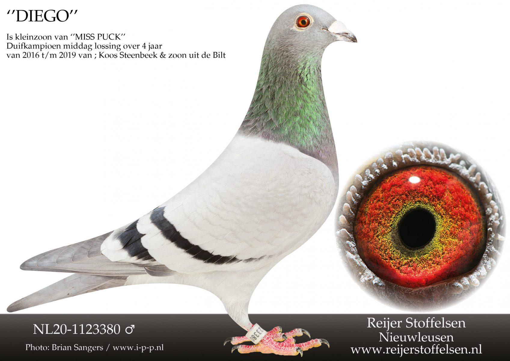 NL20-1123380-scaled
